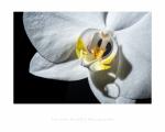 jbrault-orchidee-3